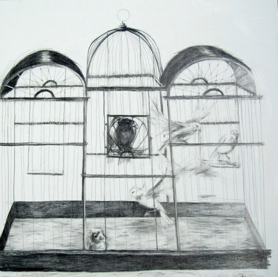 Bird in a cage - 100cm x 100cm. Drawing - graphite on canvas