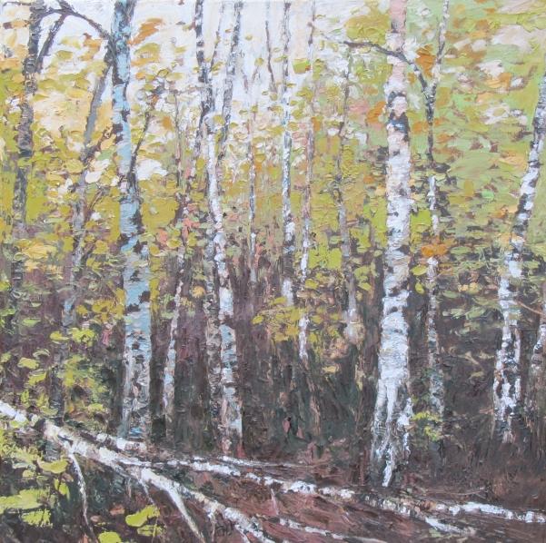 Silver birch - 50cm x 50cm